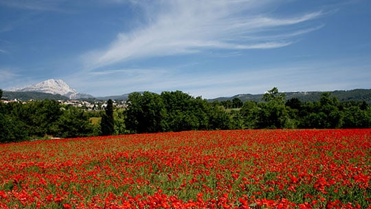 Field of poppies around Restanques de Beaudine | Luberon